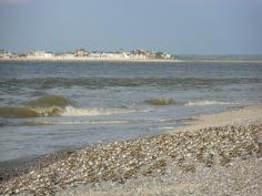 Baie De Somme Juillet 2012 025