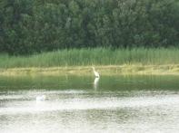 Baie De Somme Juillet 2012 168