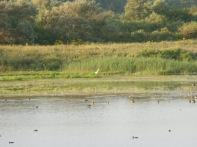 Baie De Somme Juillet 2012 169