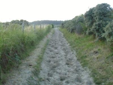 Baie De Somme Juillet 2012 208