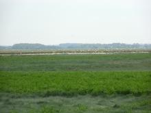 Baie De Somme Juillet 2012 235