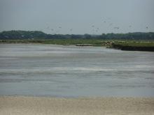 Baie De Somme Juillet 2012 254