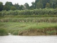 Baie De Somme Juillet 2012 262