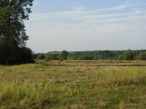 Belloy-sur-Somme 081