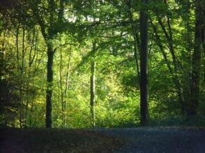Berny-sur---NoyeVallée Grand-Mère _ Bois de Berny 002