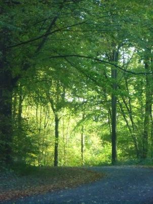 Berny-sur---NoyeVallée Grand-Mère _ Bois de Berny 003