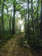 Berny-sur---NoyeVallée Grand-Mère _ Bois de Berny 007