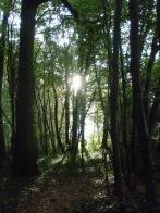 Berny-sur---NoyeVallée Grand-Mère _ Bois de Berny 008