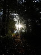 Berny-sur---NoyeVallée Grand-Mère _ Bois de Berny 009