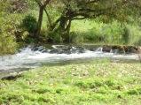 Berny-sur---NoyeVallée Grand-Mère _ Bois de Berny 017