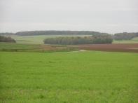 Berny-sur---NoyeVallée Grand-Mère _ Bois de Berny 025