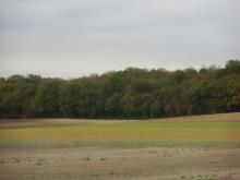 Berny-sur---NoyeVallée Grand-Mère _ Bois de Berny 028