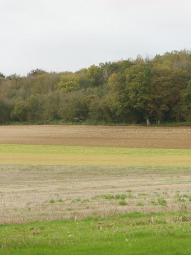Berny-sur---NoyeVallée Grand-Mère _ Bois de Berny 029