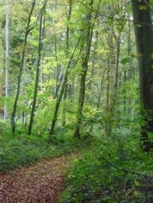 Berny-sur---NoyeVallée Grand-Mère _ Bois de Berny 031