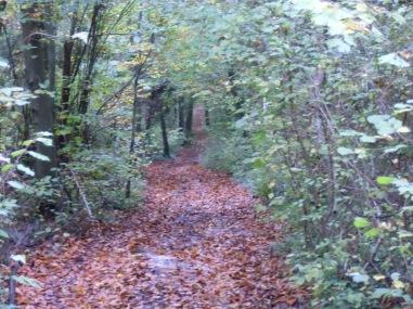 Berny-sur---NoyeVallée Grand-Mère _ Bois de Berny 034