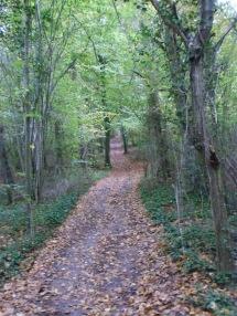 Berny-sur---NoyeVallée Grand-Mère _ Bois de Berny 035