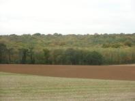 Berny-sur---NoyeVallée Grand-Mère _ Bois de Berny 042