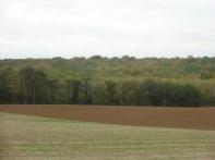 Berny-sur---NoyeVallée Grand-Mère _ Bois de Berny 043