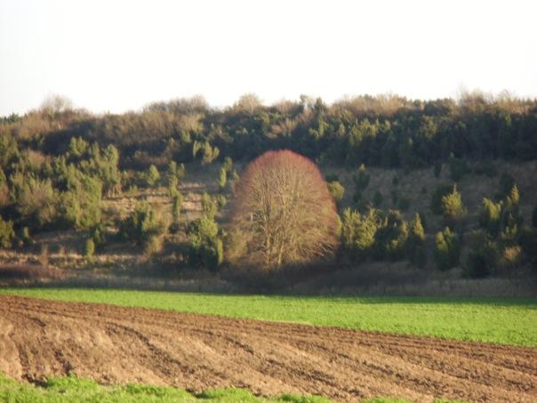 Grattepanche_La_Montagne_De_GresDecembre2012 018