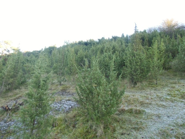 Grattepanche_La_Montagne_De_GresDecembre2012 028