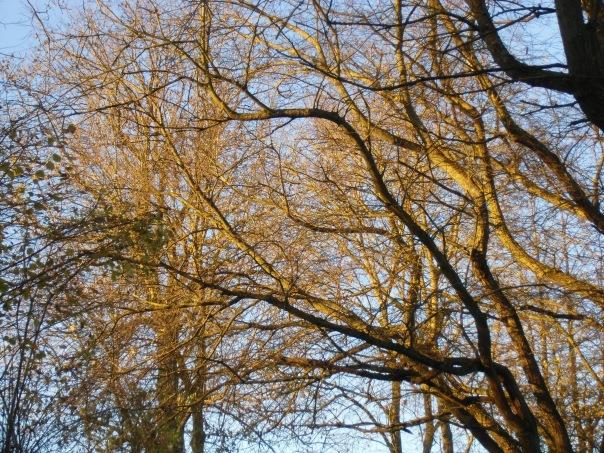 Grattepanche_La_Montagne_De_GresDecembre2012 045