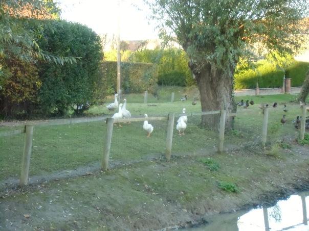 Grattepanche_La_Montagne_De_GresDecembre2012 048