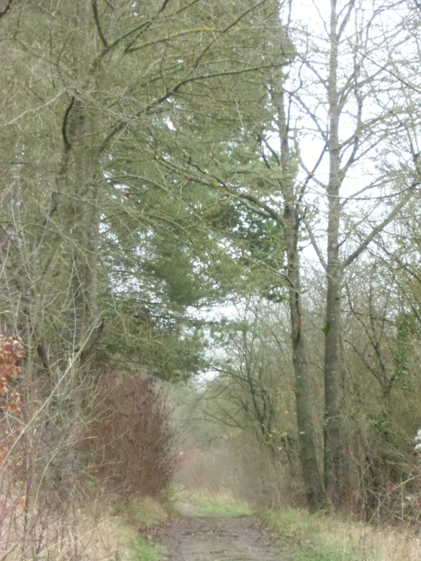 Circuit-LeBois-Du-Quesnoy-Fossemanant-8km 022