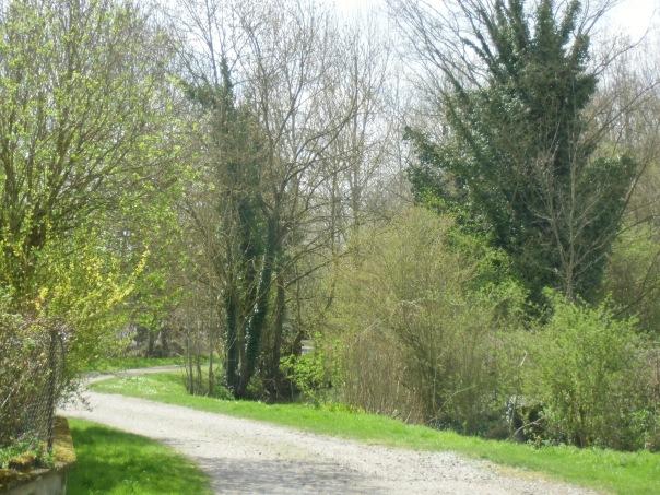 Rando-  Le bois du roi - 9km Remiencourt 002
