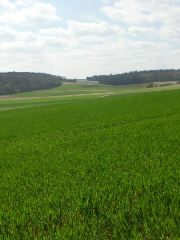 Rando-  Le bois du roi - 9km Remiencourt 015
