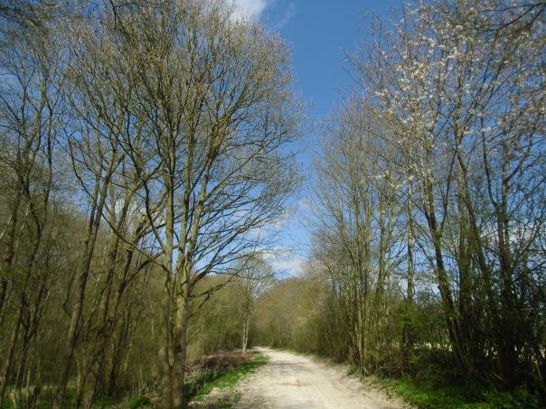 Rando-  Le bois du roi - 9km Remiencourt 024