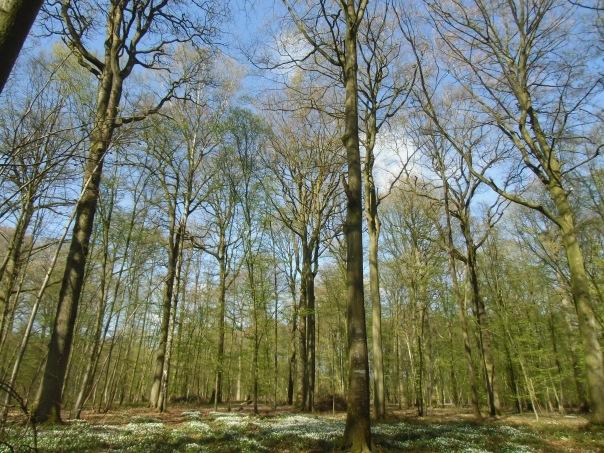 Rando-  Le bois du roi - 9km Remiencourt 035