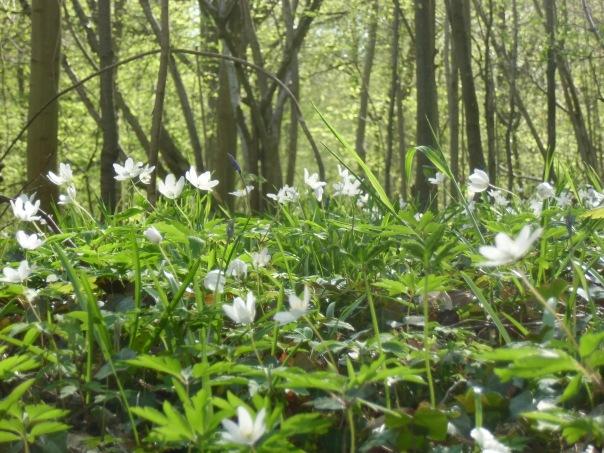 Rando-  Le bois du roi - 9km Remiencourt 043